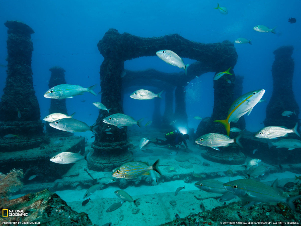 Fish and Pillar