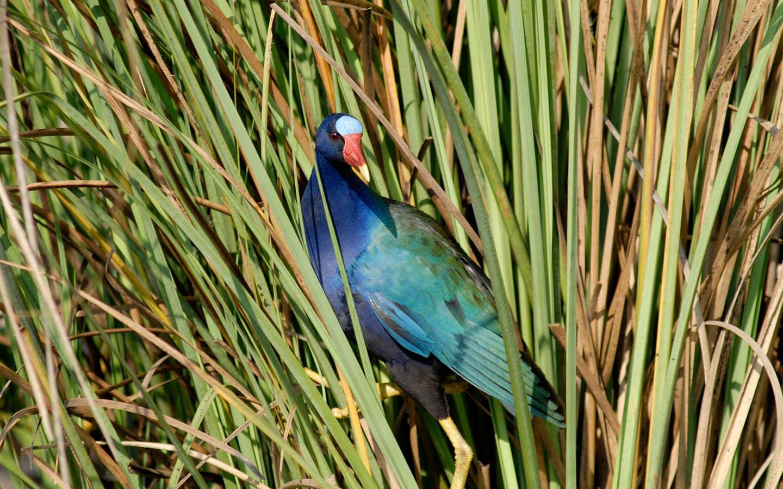 Tropical Audubon Society