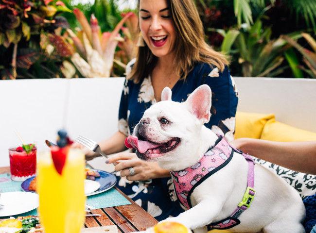 Facciamo uscire i cani - Il tuo cucciolo è il benvenuto senza spese per animali domestici