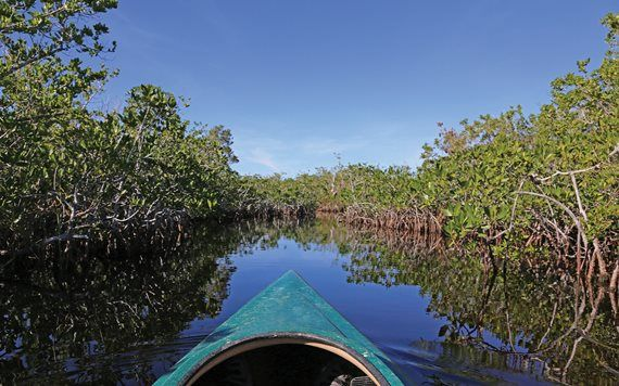 Kayaking through mangroves in Hell's Bay trail.