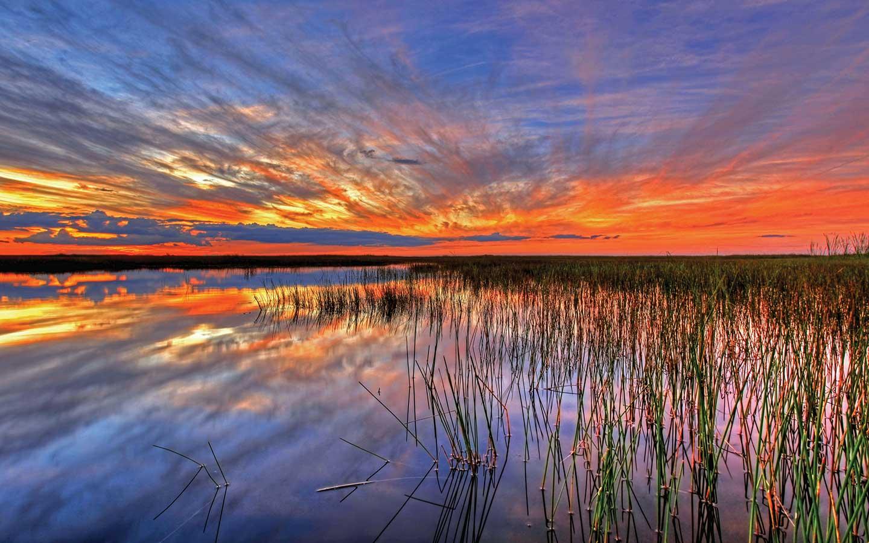 Everglades Area