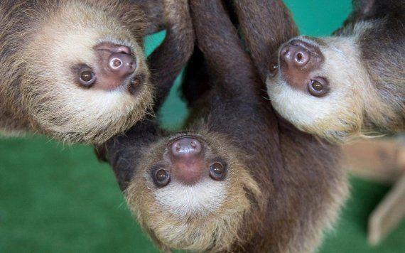 Zoo Miami Sloths
