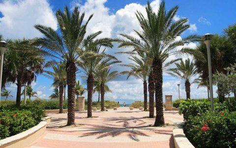 迈阿密的重新开放: 迈阿密旅行须知