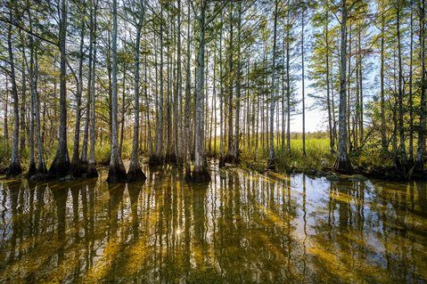 Visit Big Cypress National Preserve