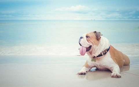Miami's Dog Beaches