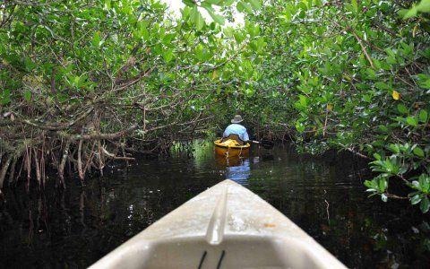 Faça sua própria aventura ecológica