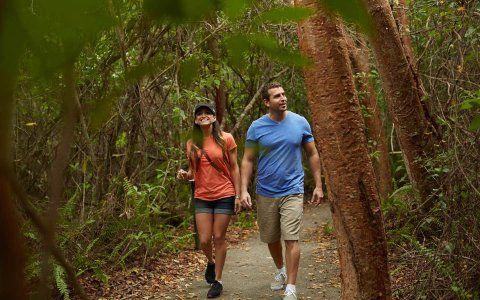As melhores trilhas para caminhada e caminhada de Miami