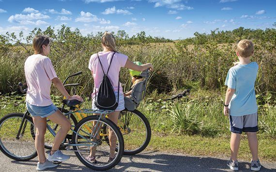 Family on bicycles stopping and looking at an alligator.