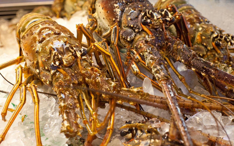 Lobster at Garcia's