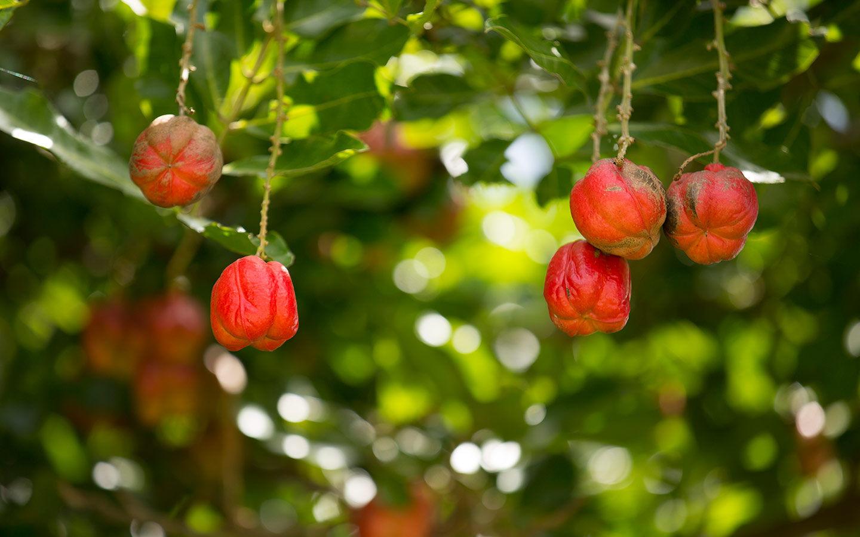 Parque das Frutas e Especiarias