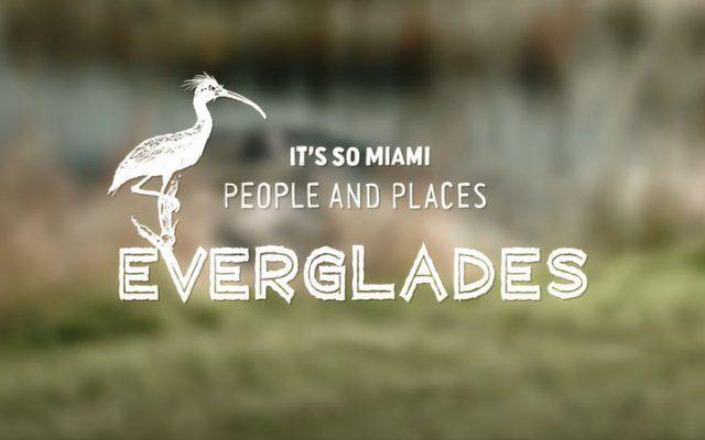 It's So Miami: Everglades
