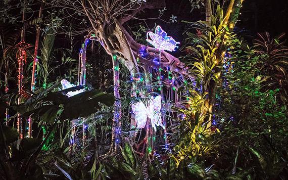Nights of Lights at Pinecrest Gardens