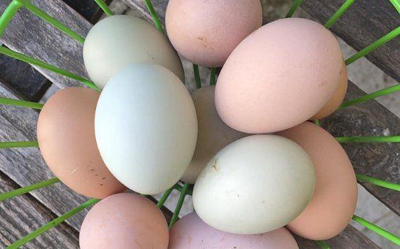 The Little Farm fresh eggs