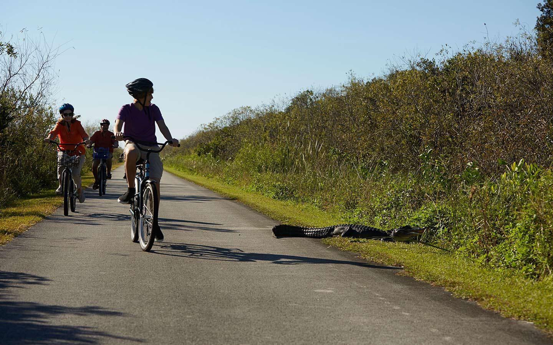 ciclismo de everglades