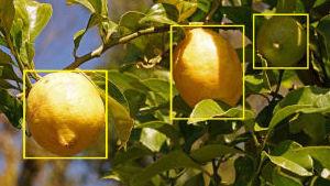 Fruit Annotation