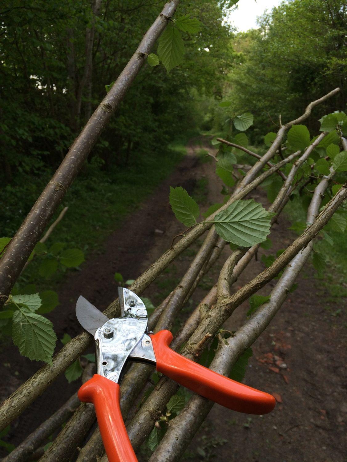 Die mindestens 230 cm langen Aste werden von Astrieben und Blätter befreit.