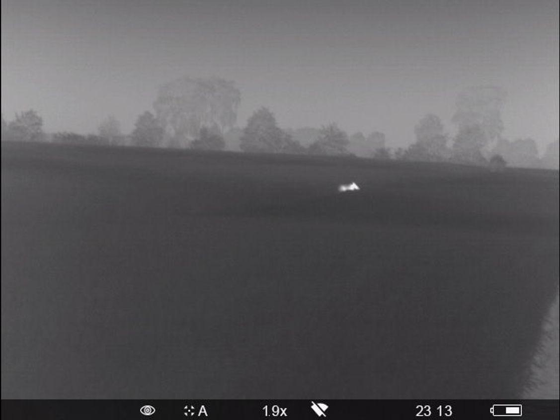 Das weit entfernte Stück Schwarzwild bis auf 60 Meter angepirscht. Ansprechen immer noch nicht möglich durch den Weizen, der die Bauchlinie verdeckt.