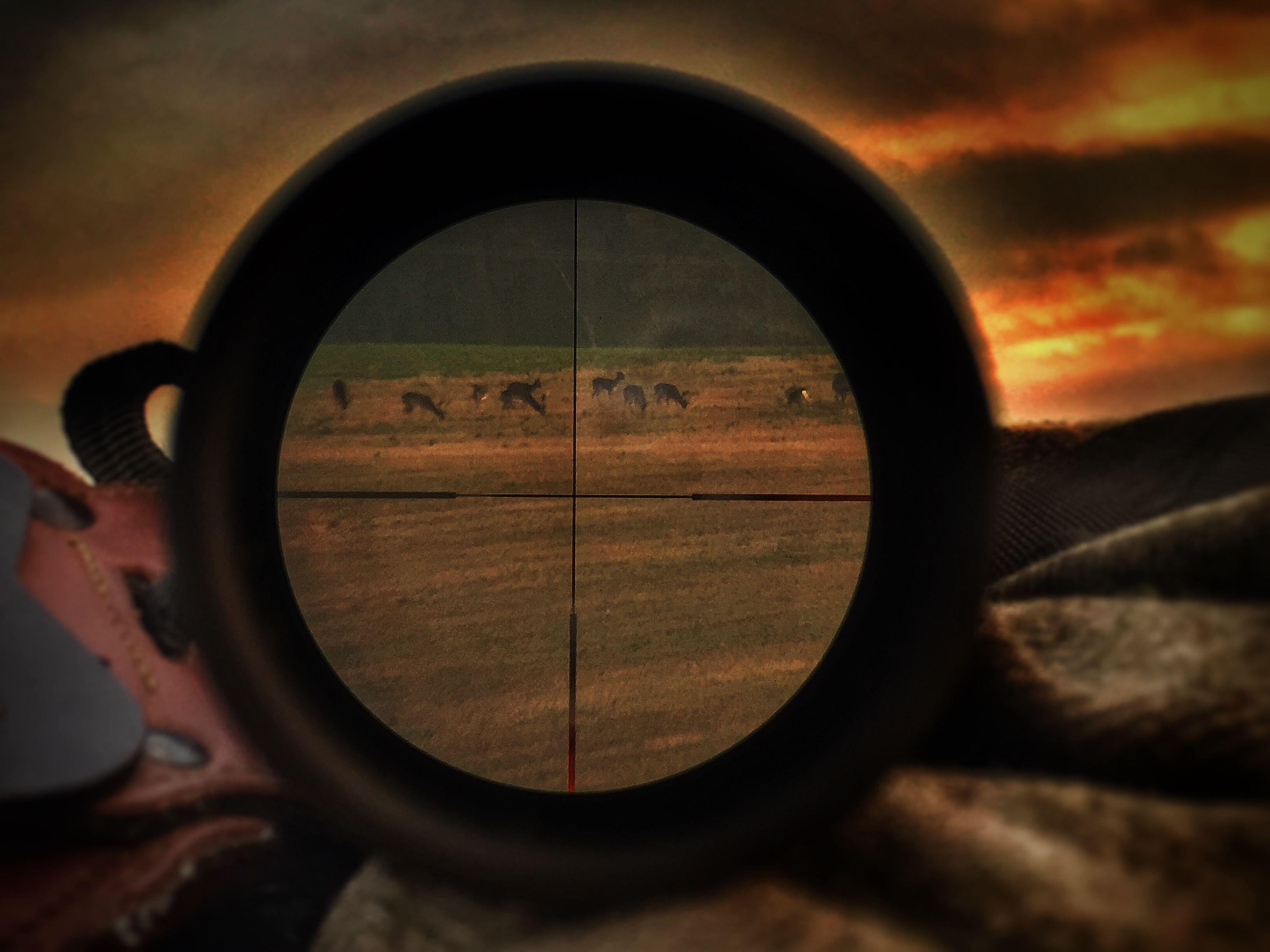 Jagd Entfernungsmesser Rätsel : Nachtjagd mit dem steiner nighthunter u die sonne geht unter