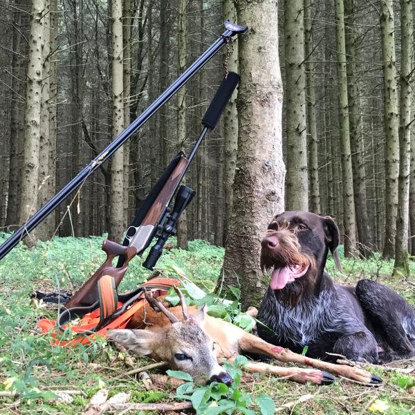 Rehwild - Alles für die erfolgreiche Jagd