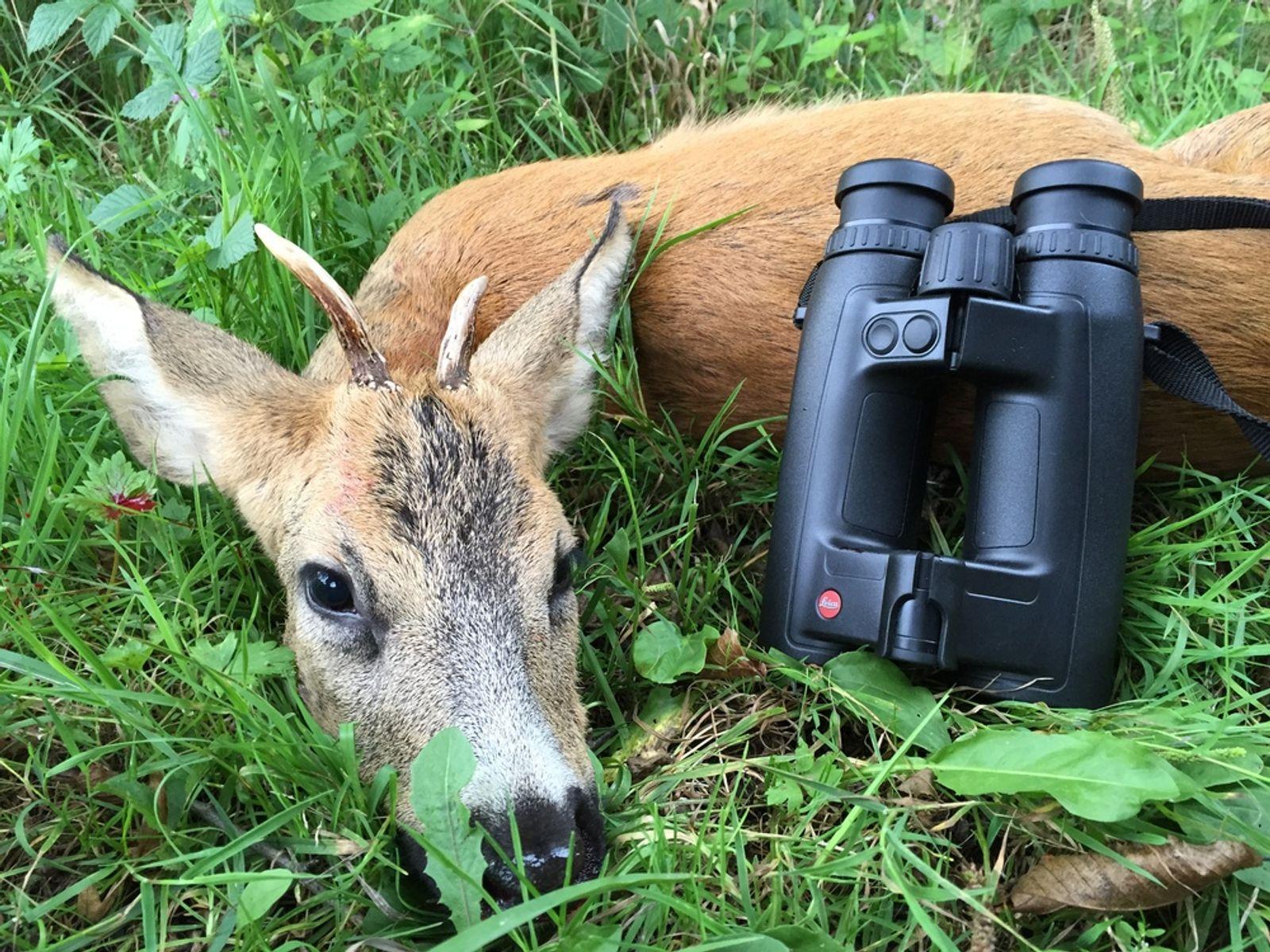 Jagd freizeit leica noctivid fernglas
