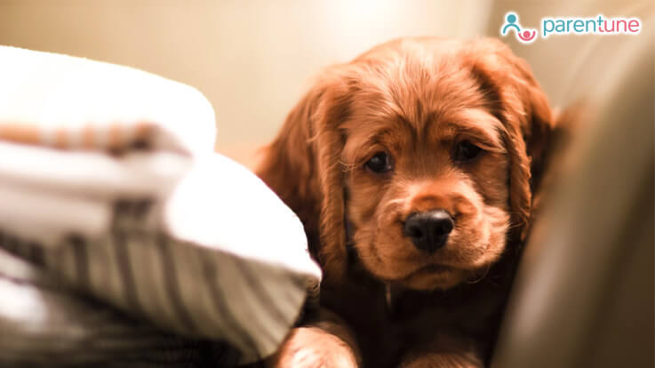 How to keep your pet safe this Diwali