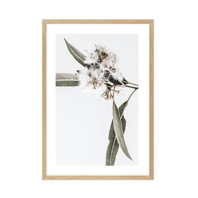 Elegant Eucalyptus Flower Canvas Prints-Heart N' Soul Home-15x20cm No frame-A-Heart N' Soul Home