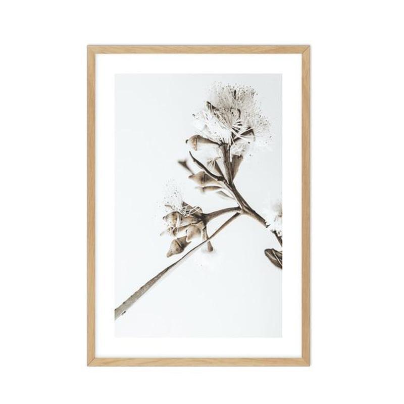 Elegant Eucalyptus Flower Canvas Prints-Heart N' Soul Home-15x20cm No frame-B-Heart N' Soul Home