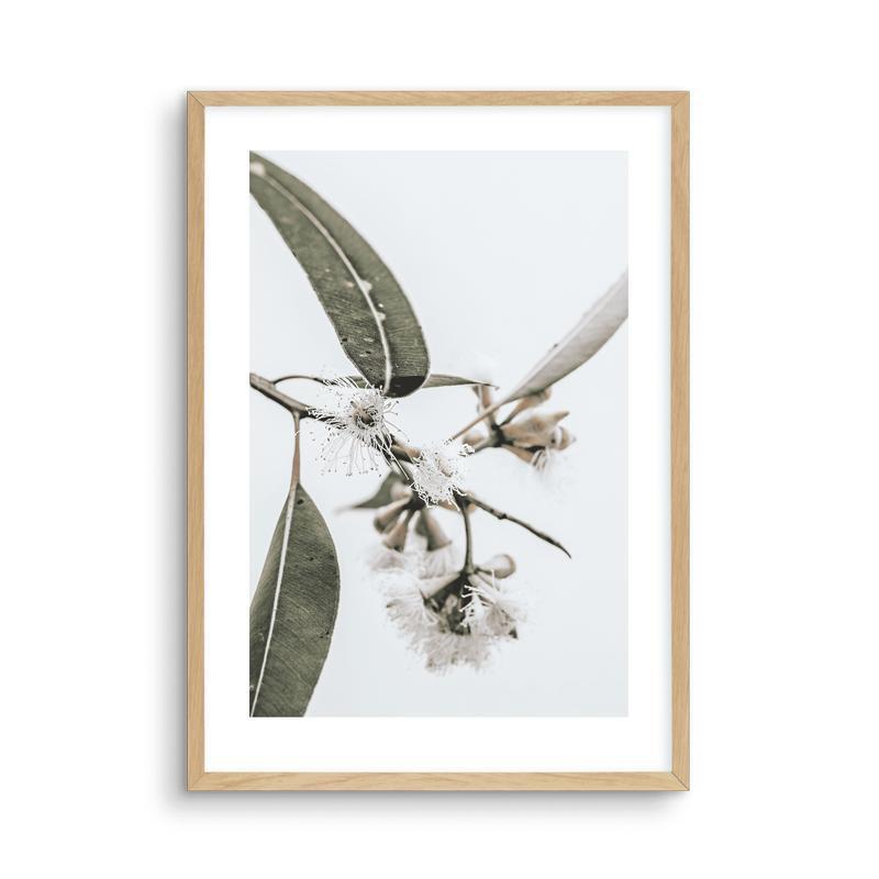 Elegant Eucalyptus Flower Canvas Prints-Heart N' Soul Home-15x20cm No frame-C-Heart N' Soul Home