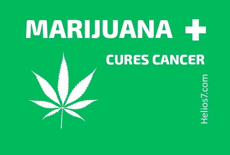 marijuana cures cancer