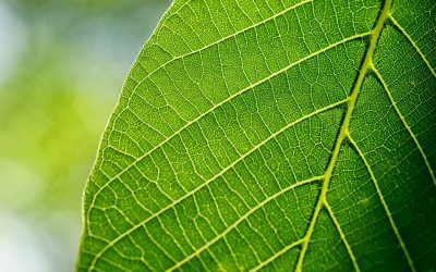 What Do Plant Veins and Leaves Actually Do?