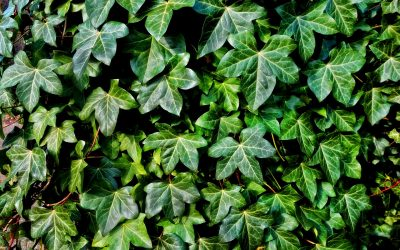 Weekly Roundup – Walking Houseplants, Machine Learning, and More: Plant News for December 1-7, 2018