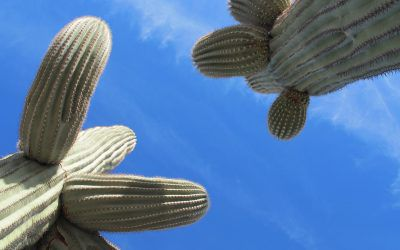 Why Do Desert Plants Have Fat Leaves and Stems, Spines, or No Leaves?