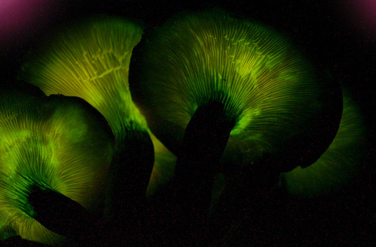 10 Cool Facts About Bioluminescent Mushrooms (and Where to Find Them)