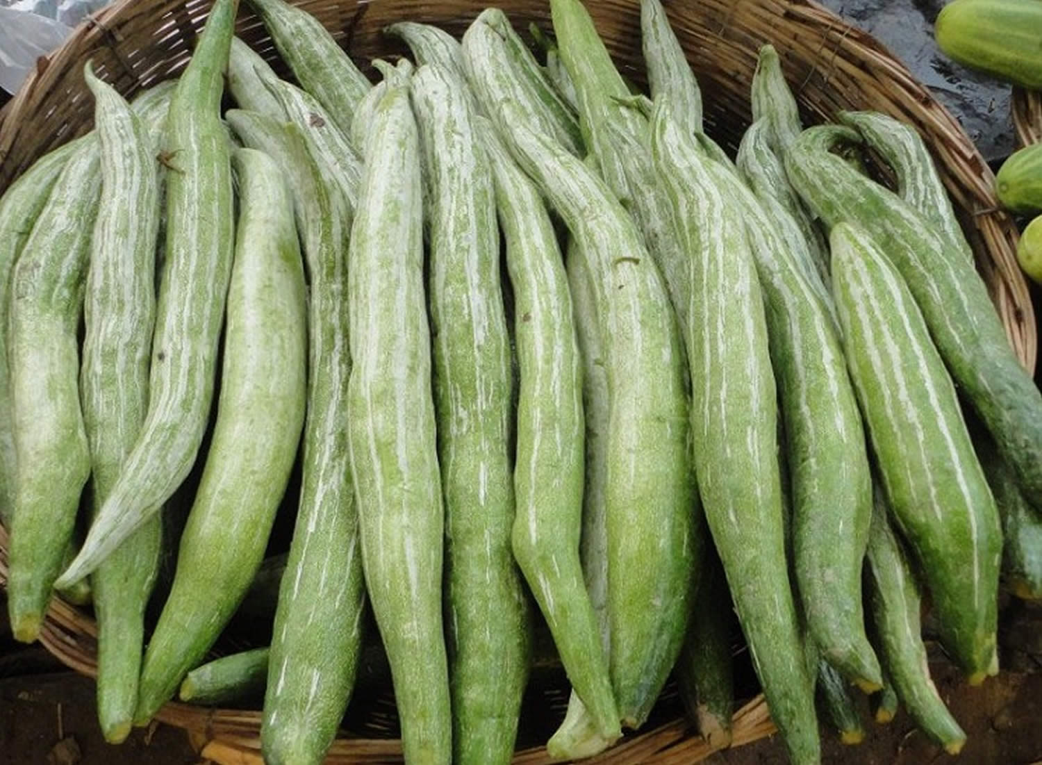 Guide to Growing Snake Gourds (and the Best Recipes for Them)