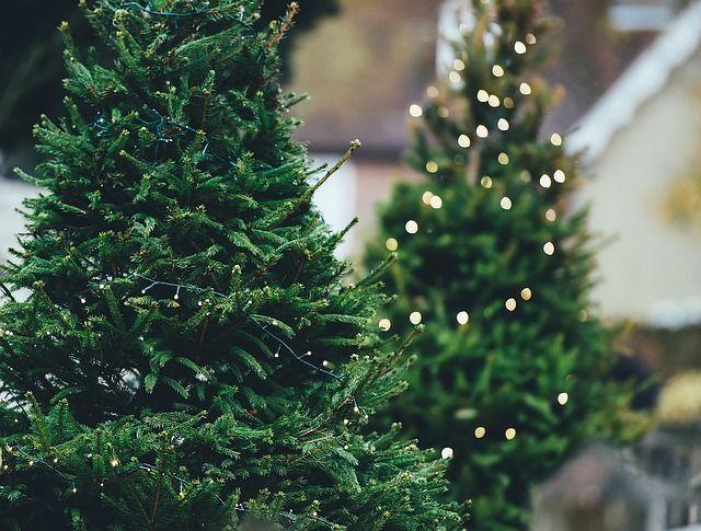 christmas trees unrpotected