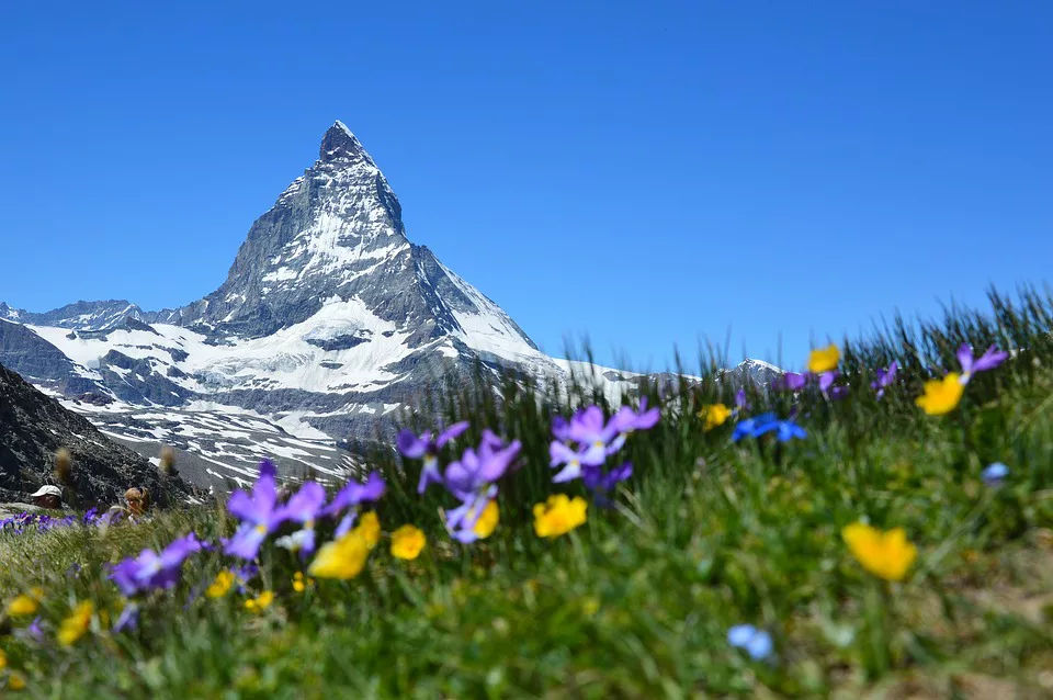 Alpine Plants To Look For When Hiking