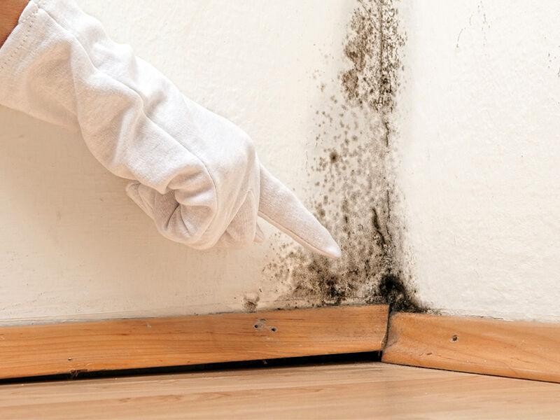 Cách xử lý mùi ẩm mốc trong phòng hiệu quả nhất là gì