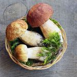 A New Range of Probiotics: Mushrooms