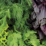 Green leafy vegetables could help prevent macular degeneration.