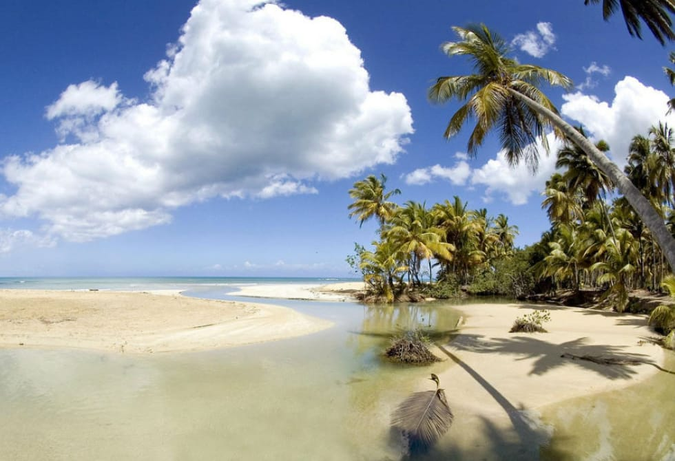 In Playa Cosón you can enjoy the shadows that the coconut trees offer