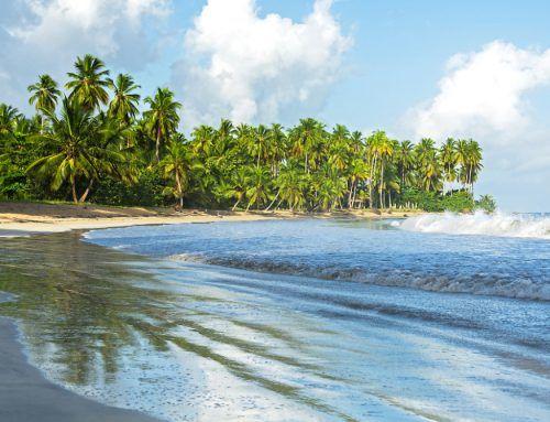 Playa Cosón, the perfect tropical environment.