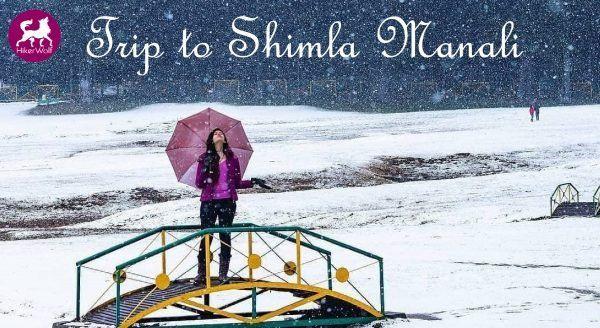 Trip To Shimla Manali With Hikerwolf