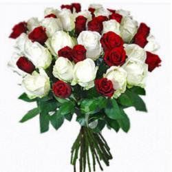 40 Red & White Roses