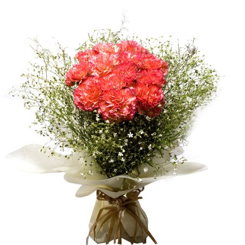 12 Pink Carnations Bunch
