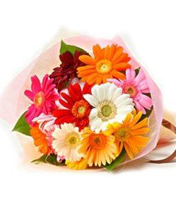 12 Multicolor Gerbera Bunch