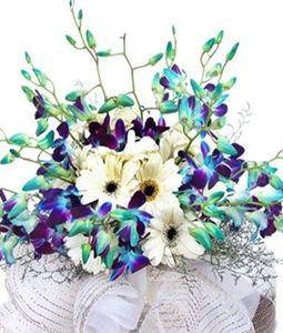 12 Blue Orchids Bunch