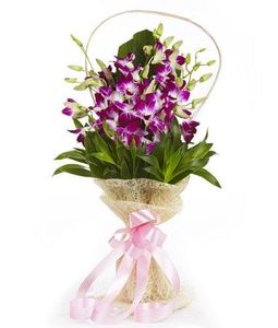 6 Orchids
