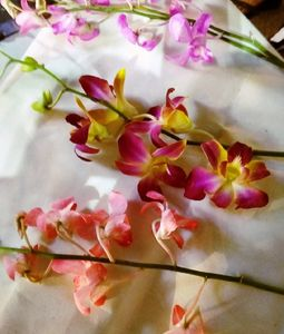 Loose Orchids 3 Shades Qty 10