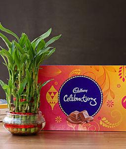 3 Layer Lucky Bamboo with Cadbury Celebration