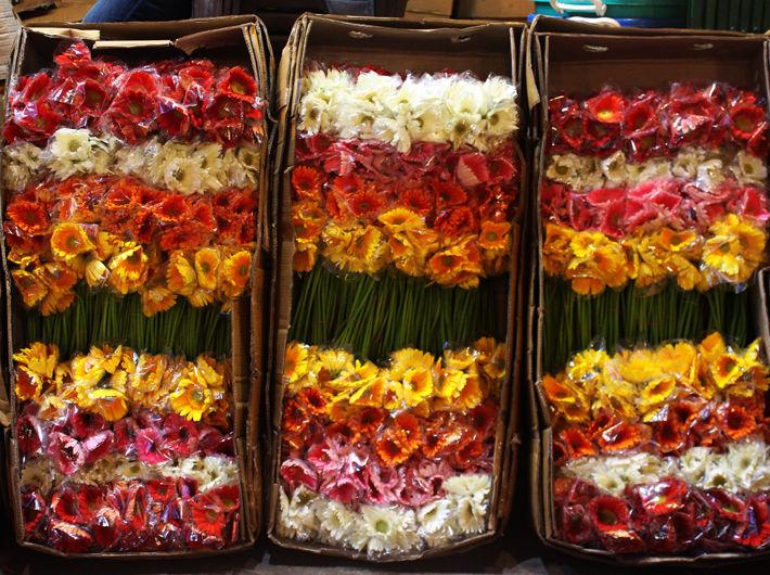 Gerbera Flowers in Bulk 1 Carton